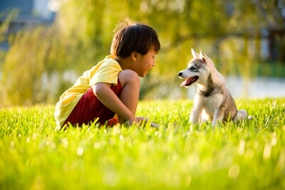 child and husky puppy talking on lawn