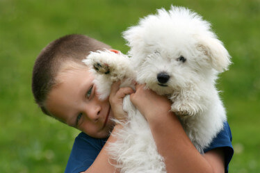 child holding Bishon Frise Puppy