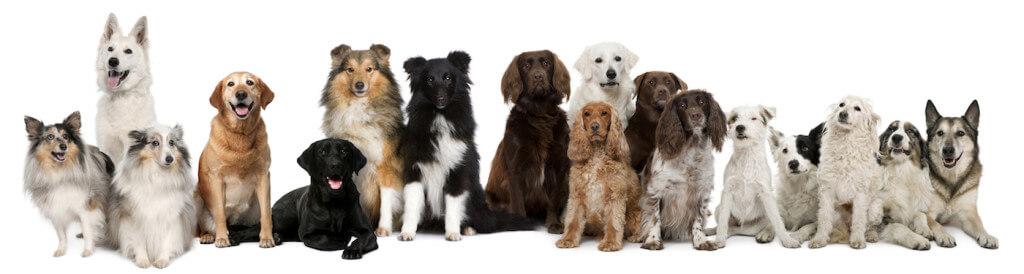 group of dogs, various breeds and sizes