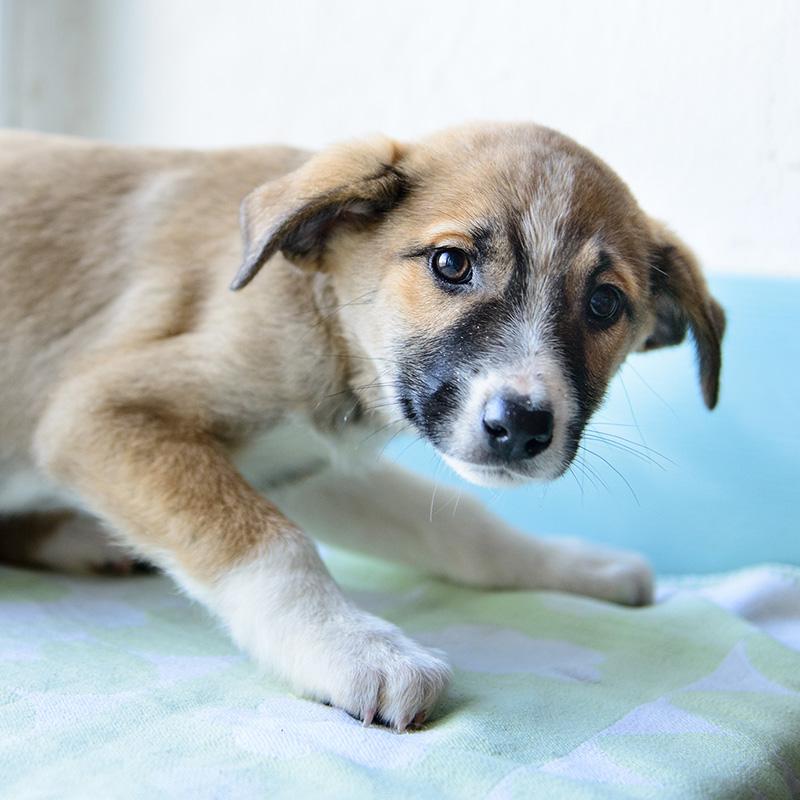 Fearful Puppy