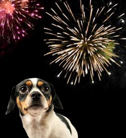 Sound Therapy for Dog Firework Fear | D for Dog